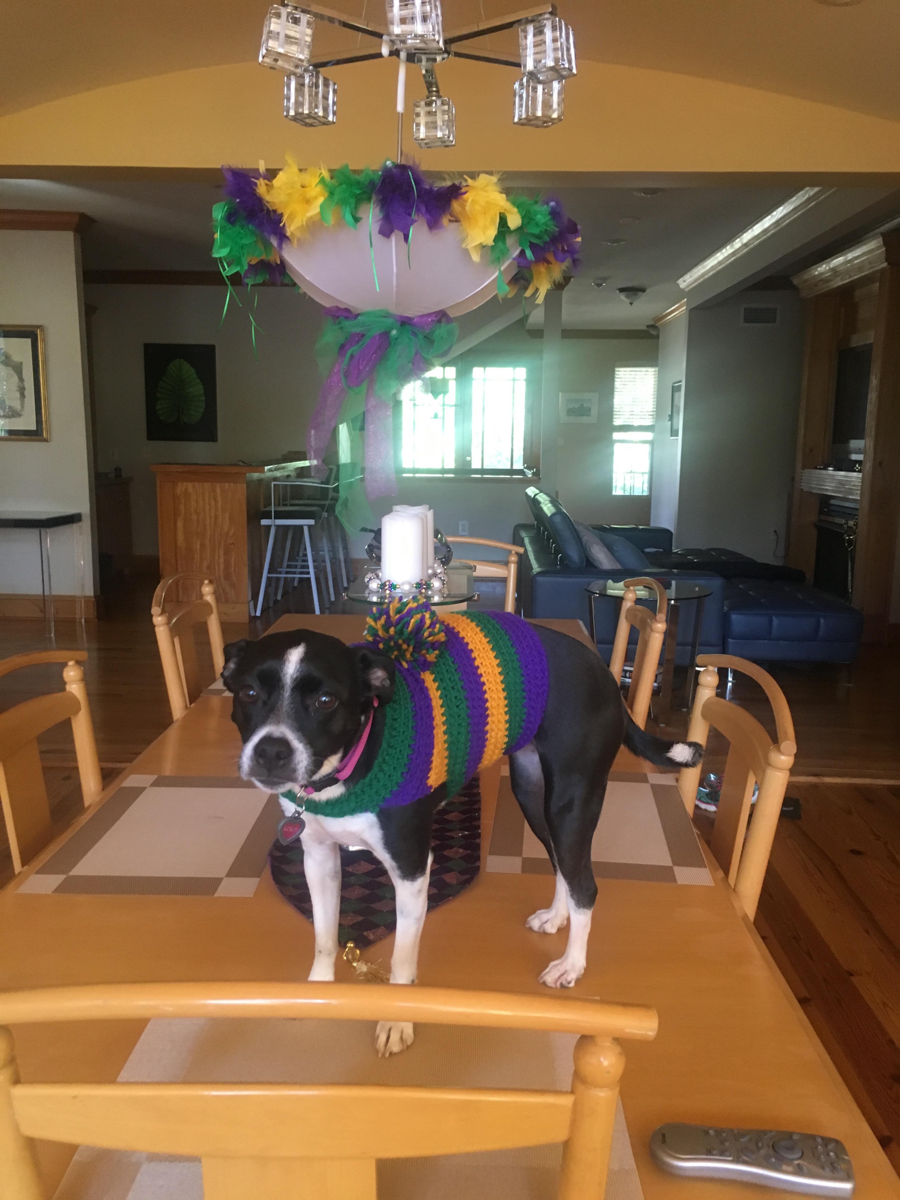 Dressing up your dog Mardi Gras