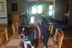 Dressing up your dog Mardi Gras