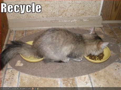 funny-pictures-cat-recycles-food.jpg