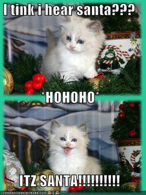 funny-pictures-its-santa-cat